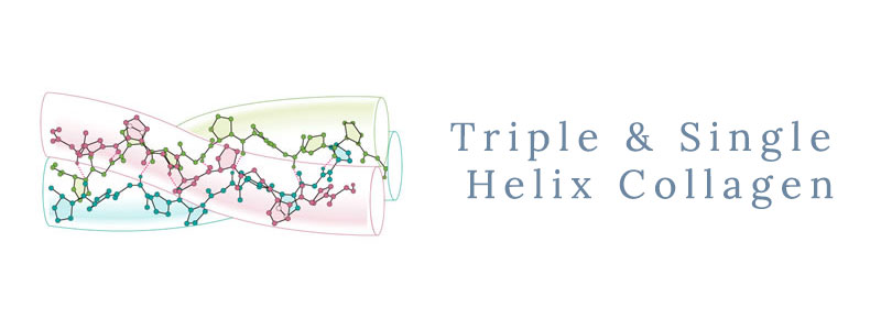 Triple-and-Single-Helix-Collagen